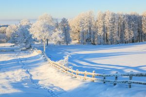 Snowy fence in winter landscape